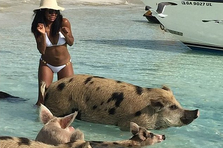 swim with the pigs